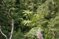 Palms and fern trees in the wilderness of New Zealand's forests