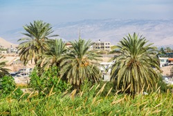 Palms and landscape near the Monastery of the Temptation and The Mount of Temptation in Jericho, Palestine. Greek Orthodox monastery. Judean desert