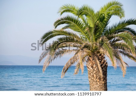 palms and sea #1139910797