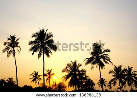 Palms and sun, tropical sunset taken in Goa, India - Shutterstock ID 138986138