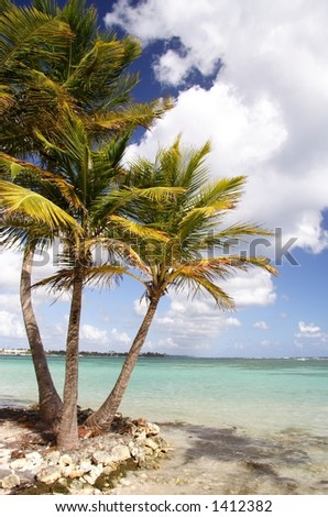 Palms at a beautiful caribbean beach
