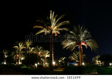 palms at night