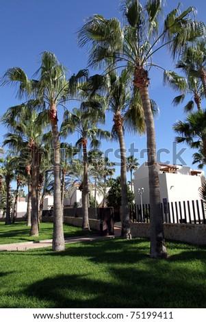Palms Caleta de Fuste  beach in Fuerteventura island Spain
