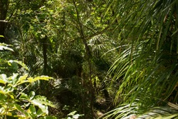 Palms in the wilderness of New Zealand's forests