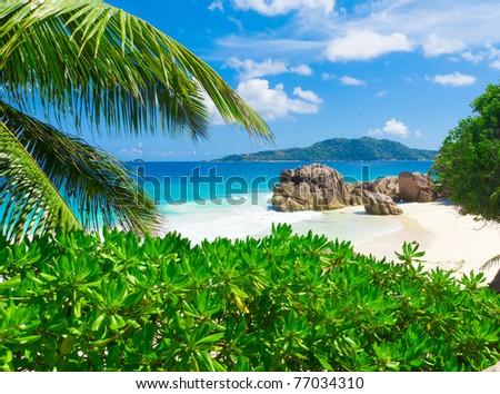 Palms Landscape Dream