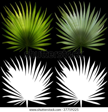 Palms leaves with alpha channels on a black background. Bit-mapped art-illustration.