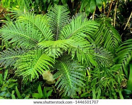 Palms, lush greens, garden scene  #1446501707
