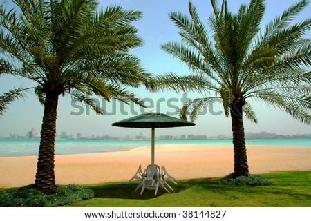 Palms on a beach in Qatar