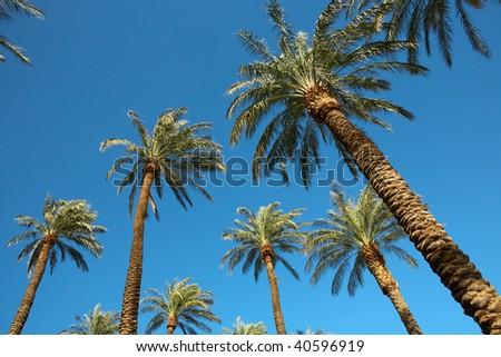 Palms on blue sky