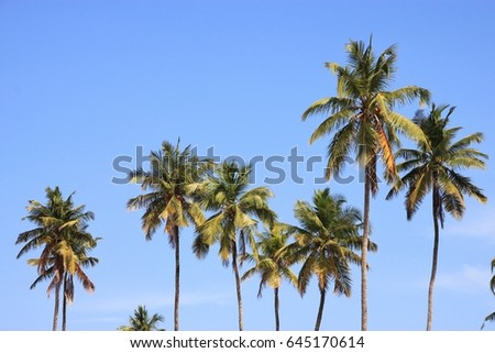 palms on island zanzibar tanzania east africa africa ez canvas