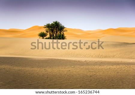 Palms On The Desert, Merzouga, Morocco