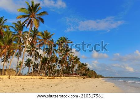 Palms over blue sky during sunny day, Zanzibar, Tanzania #210517561