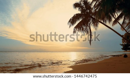 Palms over sundown sea fond. Blue sky yellow clouds and sand beach background. Indian Ocean coast  sundown sea. The waves on the shore reflect sundown sea and sky. Evening sea shore on palms beach.