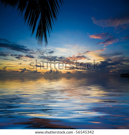 Palms overhanging the sunset waters