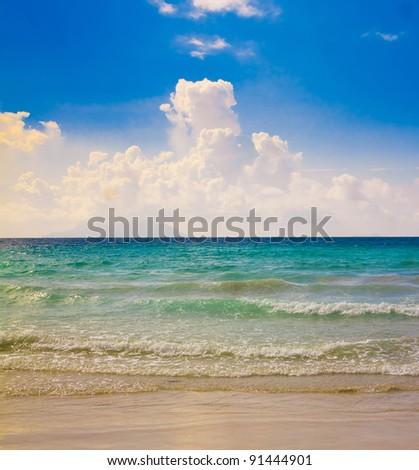 Palms Panorama Dream