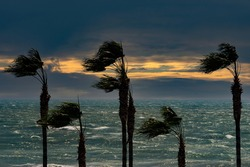 Palms, sea, sunset and windy weather