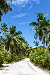 Palms Seychelles La Digue path vacation holidays paradise portrait format symbolic image palm relax