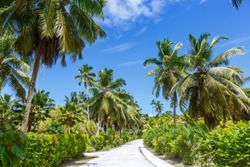 Palms Seychelles La Digue path vacation holidays travel paradise symbolic image palm relaxing