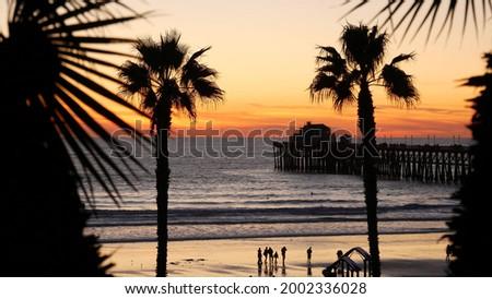Palms silhouette on twilight sky, California USA, Oceanside pier. Dusk gloaming nightfall atmosphere. Tropical pacific ocean beach, sunset afterglow aesthetic. Dark black palm tree, Los Angeles vibes. Сток-фото ©
