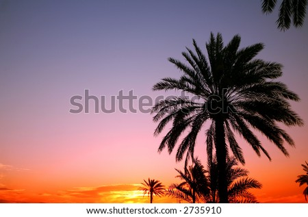 Palms silhouetted against an Arabian sunset.