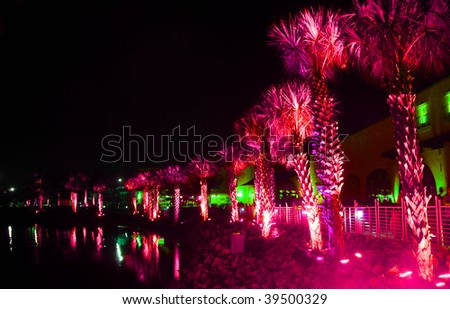 Palms under red light in nighttime Florida