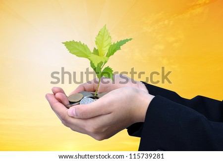 Palms with a tree growing from pile of coins with gold background