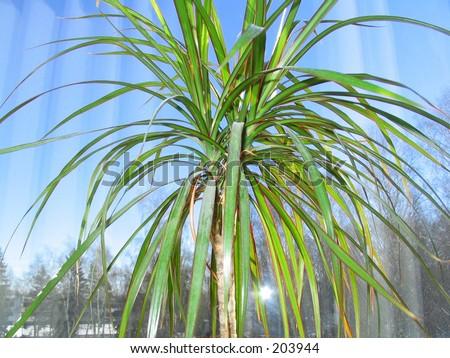 palmtree 2