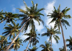palmtrees with sky