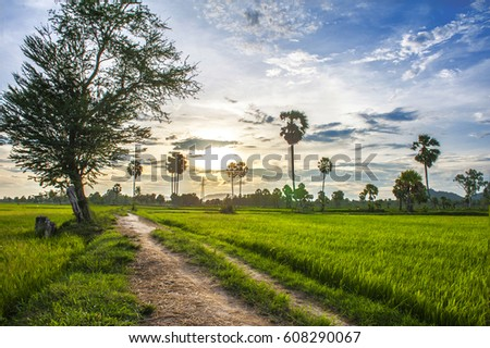 Palmyra tree on the paddy field in sunset. Mekong Delta, Chau Doc,