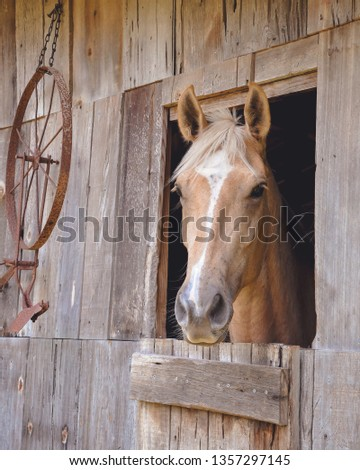 Palomino Horse in Barn #1357297145
