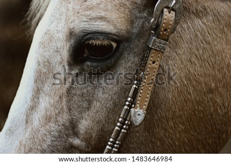 Palomino horse with a silver bridle #1483646984