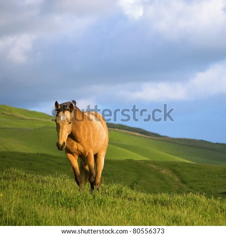 Palomino Tennessee Walker walking in pasture under cloudy sky