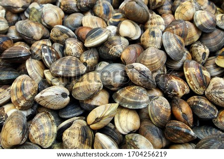 Palourde clams (grooved carpet shells), freshly collected. As displayed on a fish market in La Guerande (Brittany, France - Atlantic ocean). Several dozens of edible clams. Сток-фото ©