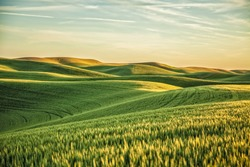 Palouse fields in sunset