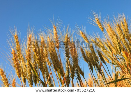Palouse Harvest Season