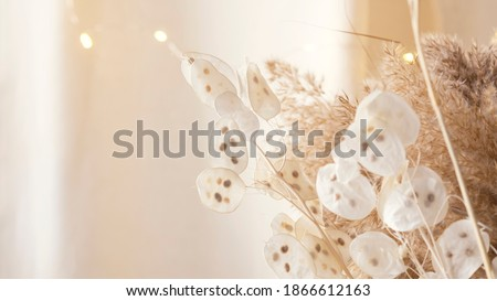 Pampas grass and lunaria are collected in a bouquet for room decor. Bouquet of dried flowers. Floral minimal home interior boho style. Boho style holiday photo zone decor. Selective focus