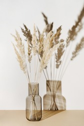 Pampas grass branches in vase on pastel neutral beige background with sun light and trendy shadow. Reeds foliage. Modern interior design concept