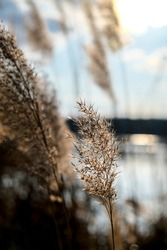 Pampas grass. Dry beige reed. Abstract natural background. Pastel neutral colors. Earth tones. Beautiful nature trend decor. Minimalistic neutral concept.