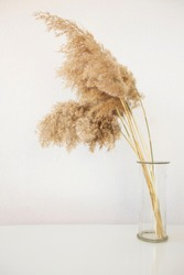 Pampas grass in a glass vase in light pastel colors. Dry reeds.