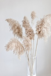 Pampas grass in a glass vase near grey wall.