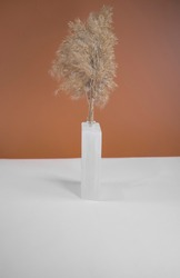 Pampas grass in a opaque glass vase. Minimal abstract composition background. Japandi interior idea. Scandinavian interior idea. Two trendy colors background with selective focus.