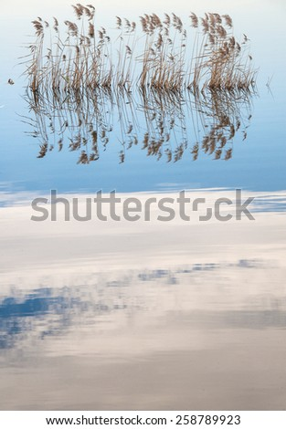 pampas in a cal lake with clouds reflex on the water Stock fotó ©