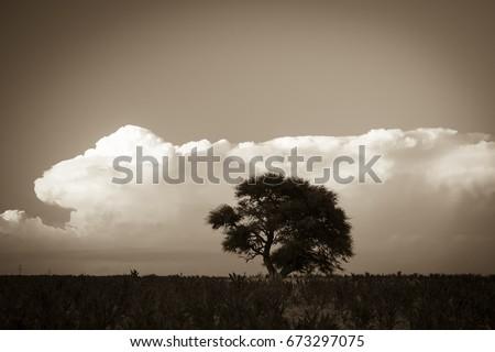 Pampas Landscape