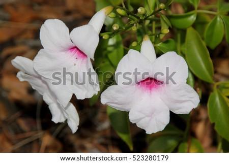 Free photos Pink center | Avopix.com