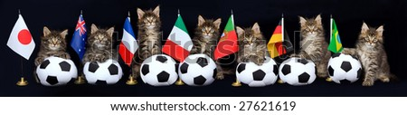 Pano panorama collage of 7 cute Maine Coon kittens on black background, with different country flags and soft miniature soccer balls