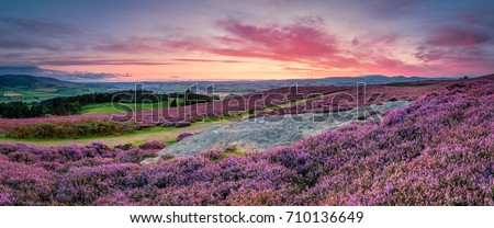 Panorama at Twilight over Rothbury Heather / Rothbury Terraces walk offers views over the Coquet Valley to the Simonside and Cheviot Hills, heather covers the hillside in summer #710136649