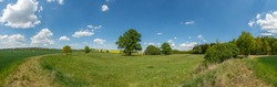 panorama big oak trees on meadow between fields and other trees in distance, white clouds on blue sky