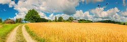 Panorama. Countryside gravel road among fields with ripening wheat and old oak tree and house on horizon. Concept of ecological tourism in Baltic countries