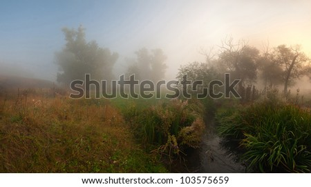 Panorama fog in forest and the stream, landscape