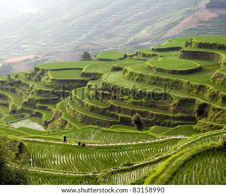 Panorama image of rice terrace on the mountain at sunset.